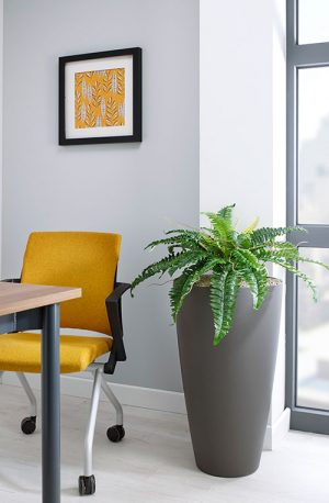 prospect plants design boston fern