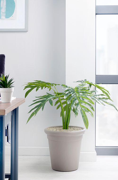prospect plants design philodendron