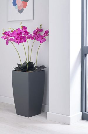 prospect plants essential magenta orchid