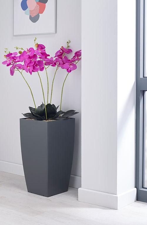 prospect plants essential magenta orchid
