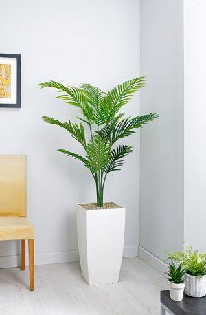 prospect plants essential paradise palm
