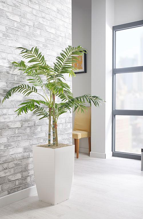 prospect plants essential parlour palm