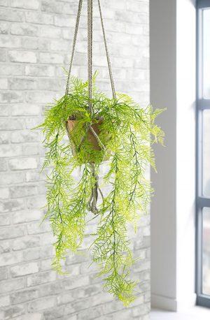 prospect plants hanging plants trailing emerald fern