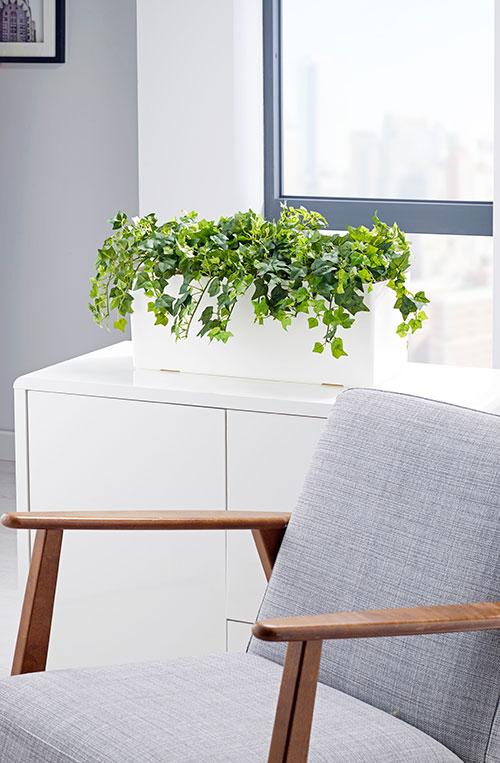 prospect plants ivy cabinet trough
