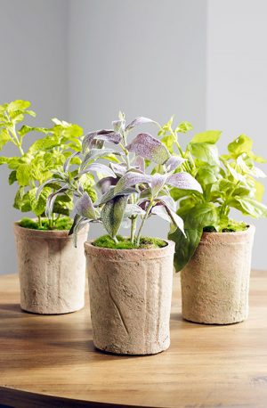 prospect plants table top set of 3 herbs